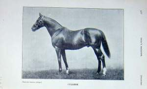 CYLLENE was one gorgeous dude -- and a sire of multiple Derby winners.