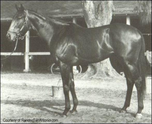 MY ECHO, MY SHADOW & ME: RUFFIAN | THE VAULT: Horse racing ...