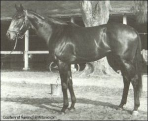 Ruffian's sire, Reviewer.
