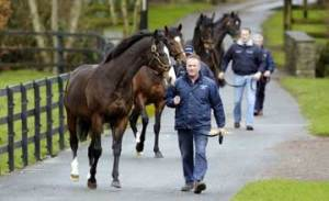 Frankel's BM sire, Sadler's Wells, and his millionaire sons out for a walk at Coolmore Ireland. The grand old man is followed by Galileo, Montjeu and High Chaparral.