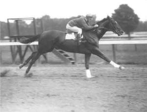 The Great One, Man O' War, shown working over the Saratoga track.