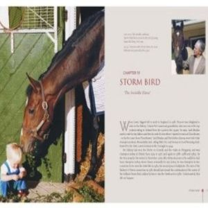 So gentle was Storm Bird, that even the very young were allowed to visit him. He endeared himself to the whole O'Brien family. Then, in early in 1981, the colt sufferred an ugly assault at Ballydoyle. A disgruntled employee got into his stall and slashed off his mane and tale. Although Storm Bird appeared to recover, everything went wrong in his 3 year-old season. A brilliant career had ended.