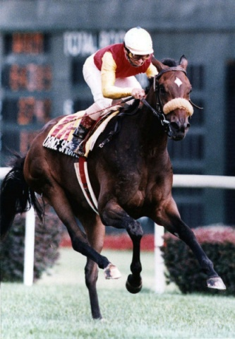 The familiar gold and red of Sam-Son was to become a hallmark of the 1991 racing season. The now unblinkered Dance Smartly, Pat Day in the irons, was easily the racing partnership of the year.