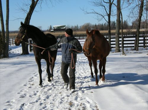 In retirement: Dance Smartly and her BFF, Rainbows Classic, at SamSon Farm.