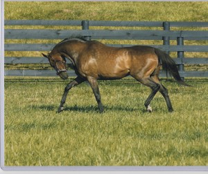 Dance Smartly always kept her shape, no matter how many foals she had. Here she is in Kentucky, having visited Thunder Gulch. Photo and copyright, The Blood-Horse.