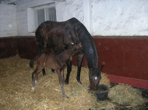 Daisy with one of her last foals, the filly Dance To The Sea.