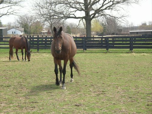 Dancethruthedawn is a broodmare at SamSon Farm in Ontario. Personal photo.