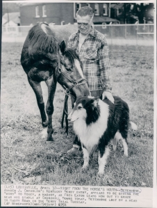 The champion, Determine,  who sired Kentucky Derby winner, Decidedly, with his friend, the collie