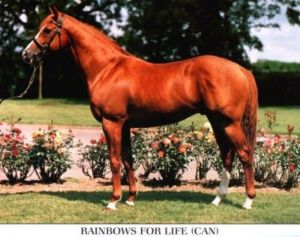 "SamSon's champion colt, Rainbows For Life, shown here as a stallion. ""Rainbows"" was champion 2 year-old of 1990, and champion older male as well as grass horse in 1992. Sold to the Czech Republic, he was a champion sire in 1999, 2004-2006. Wilderness Song died this year (2012)."