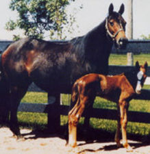 No_Class with foal