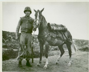 Reckless, the pride of the Marines during the Korean War, was a Korean thoroughbred. Fearless and loyal, little Reckless was beloved by her troop -- who shipped her back to the USA, according her the title of Private Reckless.