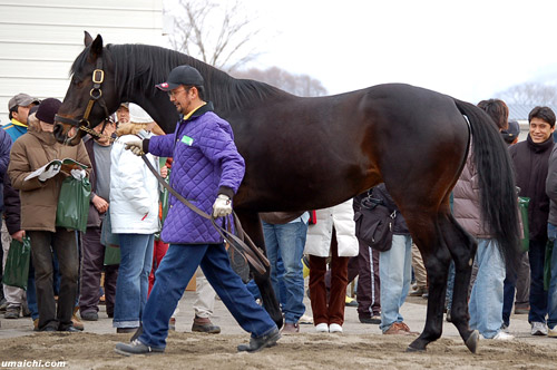 Scatter The Gold at the Arrow Stud Open House in Japan 2 years ago. He has since been sold to a stud farm in Russia.
