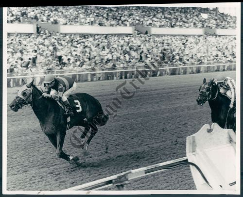Smarten, pictured here winning the 1979 American Derby at Arlington was the sire of Classy N' Smart and the broodmare sire of Dance Smartly.