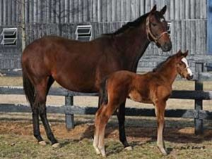 Balance shown here with her A.P. Indy colt, Mr. Besilu (2009) who is still unraced.