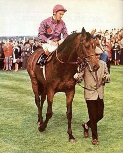 The absolute star of British racing in the last century, the brilliant Brigadier Gerard.