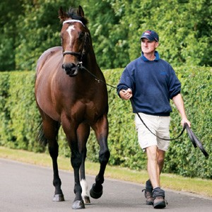 Darley's Shamardal, a son of Giant's Causeway, is a young stallion that has already had success on the track. Together with Footstepsinthesand (Giant's Causeway), he was recently hailed as one of the best young sires of 2012.