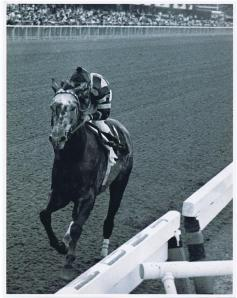 """The greatest horse to ever look through a bridle."" He may have lost the Triple Crown due to the misfortune of a pin stuck in his foot, but Spectacular Bid was one of the stars of racing in the 1970's. Shown here in his ""walkover"" at"