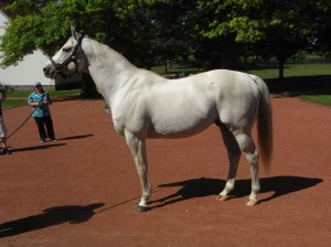 Zenyatta's second foal is sired by Tapit, shown above.