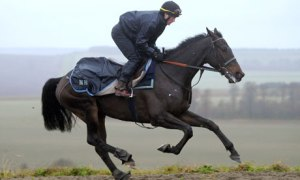 """Apprentice jockey, Nico de Boinville, is Sprinter Sacre's regular exercise rider. """" """"I've been riding Sprinter Sacre since he was a baby, we've pretty much grown up together and I know him very well,"""" he says. """"I honestly don't think you're going to get a horse who's going to serve it up to him this season, that will only happen when [his novice-chasing stablemate] Simonsig turns up..."""" Photo and copyright, Tim Ireland/PA"""
