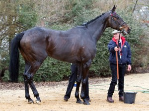 After the Arkle victory and a really good rub-down. Photo and copyright, Toby Connors.