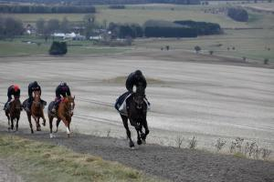 Sprinter Sacre, with Nico aboard, leads the Henderson string on a gallop. This kind of work was the testing ground for some of the greats of the flat in the UK too, notably Nijinsky and Frankel. Photo and copyright, Toby Connors.