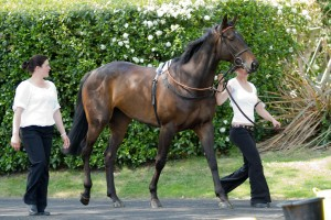 Champion Long Run won the Gold Cup in 2011. He will do his very best to win a second time on March 15, the last day of the Festival.