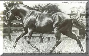 Bull Dog was another American foundation sire, produced by Plucky Liege.