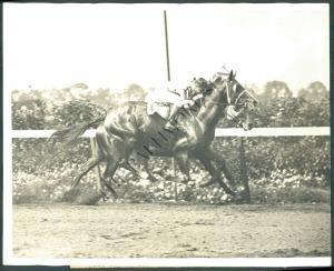 The running of the Belmont Stakes of 1930. Gallant Fox is just getting ready to leave Whichone behind in the stretch in this shot. Photo and copyright, The Baltimore Sun.