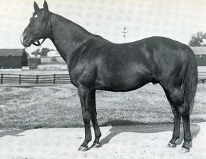 Sir Gallahad III raced in France, where he was brilliant, and shortly after going to stud, was sold to a partnership of William Woodward, A.B. Hancock.