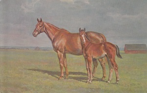 The broodmare Marguerite was a Blue Hen, but her partner was only Sir Gallahad III