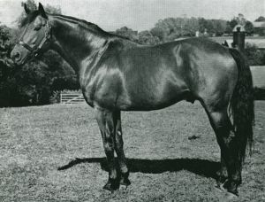 Hill Prince, Dark Mirage's BM sire, was the star of Christopher Chenery's Meadow Stable at its peak.