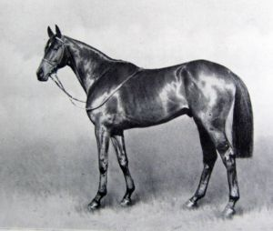 Persian Gulf, mighty on the turf and in the shed was Dark Mirage's great grandsire.