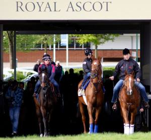 Looking over the course at Royal Ascot. (Photo and copyright, Steve Cargill)