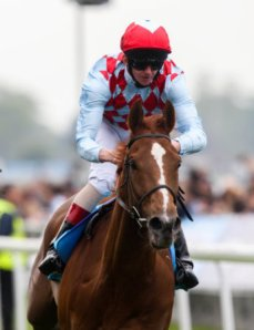 Red Cadeaux is a veteran of 36 races and a multi-millionaire who last ran second to Animal Kingdom in the Dubai World Cup.