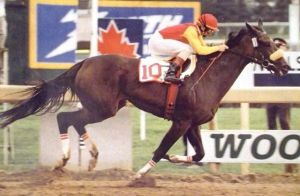the Queen of Canadian racing, DANCE SMARTLY, with Pat Day in the irons speeds home to take the Queen's Plate for owner Ernie Samuels' in