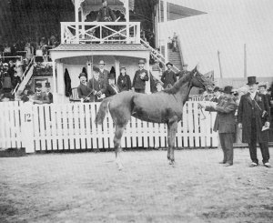 In 1902, LYDDITE won the QUEEN'S PLATE for owner Nataniel Dymant of Orkney Stud.
