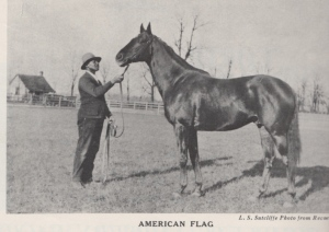 From his sire's first crop, AMERICAN FLAG was said to be cast in MAN O' War's image.