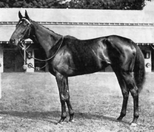The champion BLACK MARIA was piloted by COLTILETTI and shared Champion 3 year-old Filly honours with