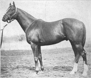 The handsome STAR SHOOT, sire of SIR BARTON and GREY LAG.