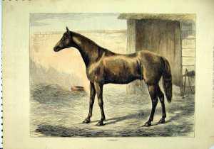 KINCSEM'S sire, CAMBUSCAN (1861)