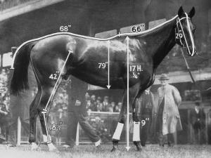 How big was PHAR LAP? Have a look at these figures! Photo and copyright, Victoria Racing Museum, Australia.