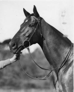 AMOUNIS, a champion in his own right was another favoured for the Caulfield Cup.