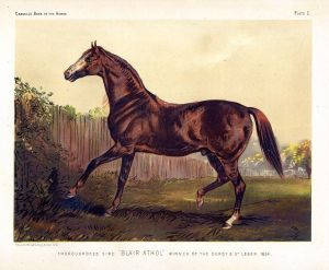 IMP descended from the great British thoroughbred, BLAIR ATHOL, who won the Epsom Derby on his very first appearance on the turf. He followed that up with a win in the St. Leger.