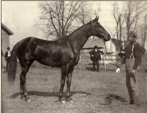 IMP with her groom, TOM TANDY. Although precious little is known about either Tom or his relationship with the champion, it would seem that he was her greatest admirer and very likely her one close friend. Photo and copyright, Ohio Historical Society.
