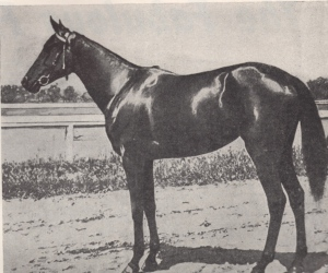 IMP, aka THE COAL BLACK LADY, pictured as a juvenile in the Turf and Sport Digest.