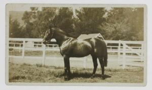 PHAR LAP'S sire, NIGHT RAID.