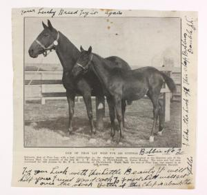 ENTREATY with a full sibling to PHAR LAP at her side.