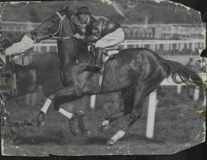 The great horse carried as much as 138 lbs. weight in his second season on the turf. But it didn't stop PHAR LAP from winning 19 of 21 starts. Photo and copyright, The Herald, Australia