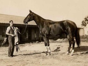 PHAR LAP with Tommy, ears pricked, undoubtedly thinking about the lumps of sugar his friend always carried in his pockets.