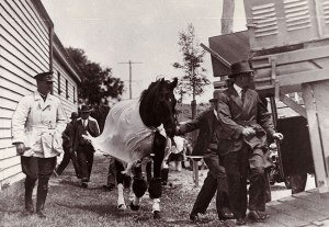 Police accompany PHAR LAP to the start of the Melbourne Cup.